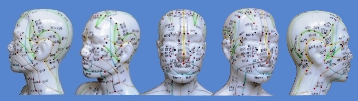 Akupunkturmodelle